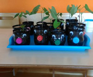 Cap Canaille Rolle cultive son projet potager