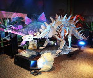 Sur les traces des dinosaures…